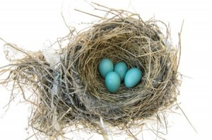 Bird's Nest with Robins Eggs